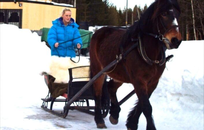Hest og slede *
