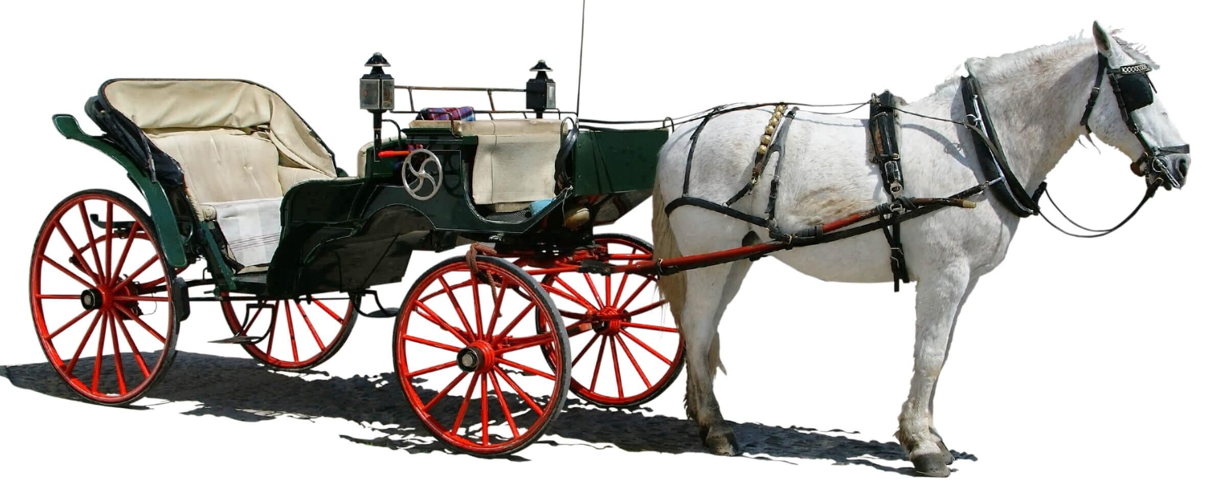 Hvit hest og antikk vogn