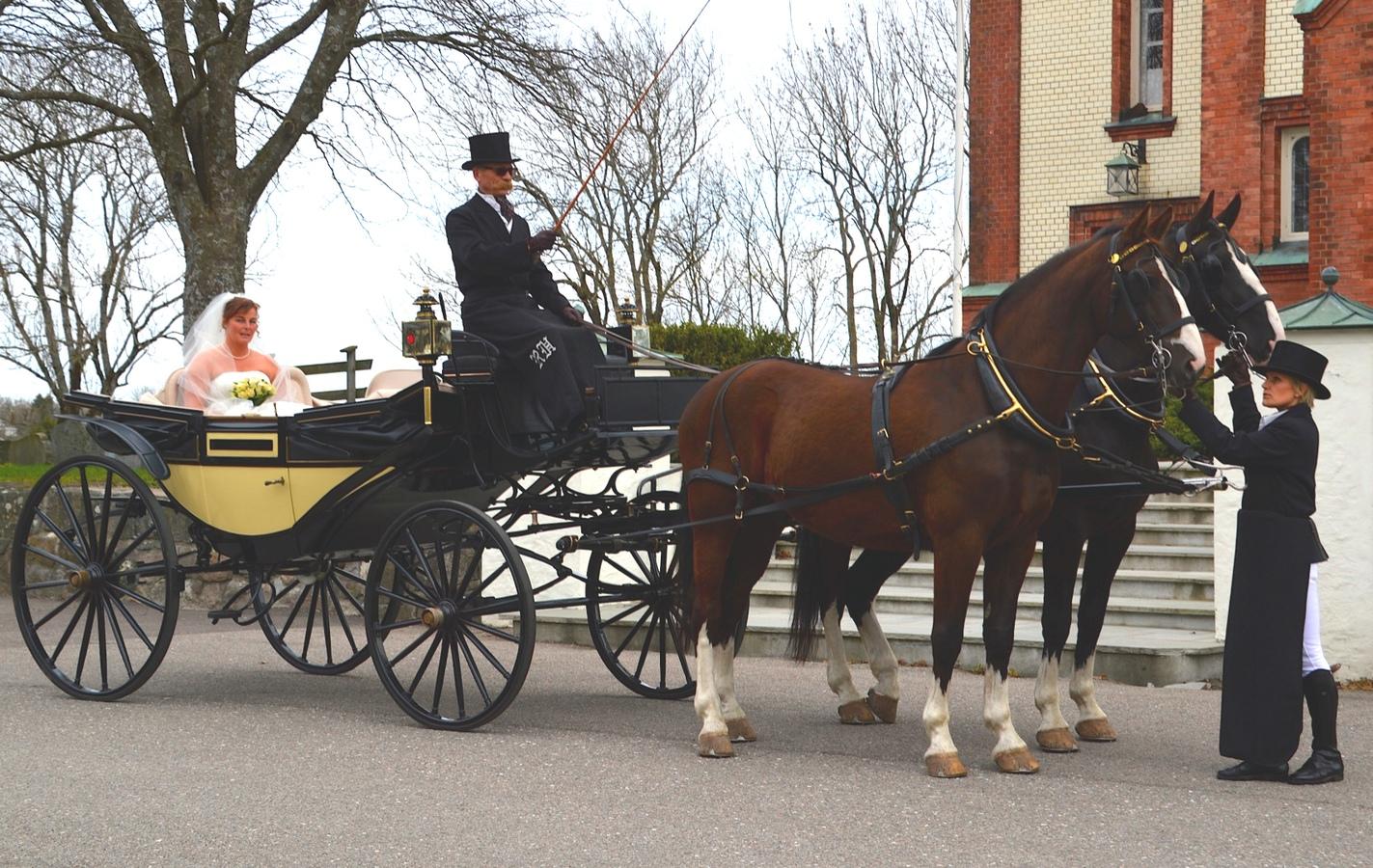 To hester med bryllupsvogn