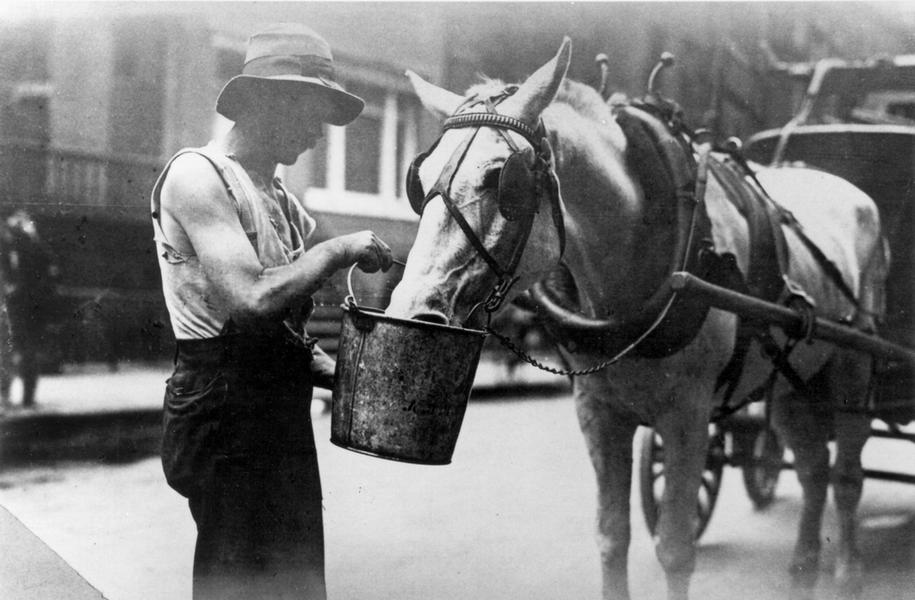 Gammelt bilde med mann som gir hesten drikke