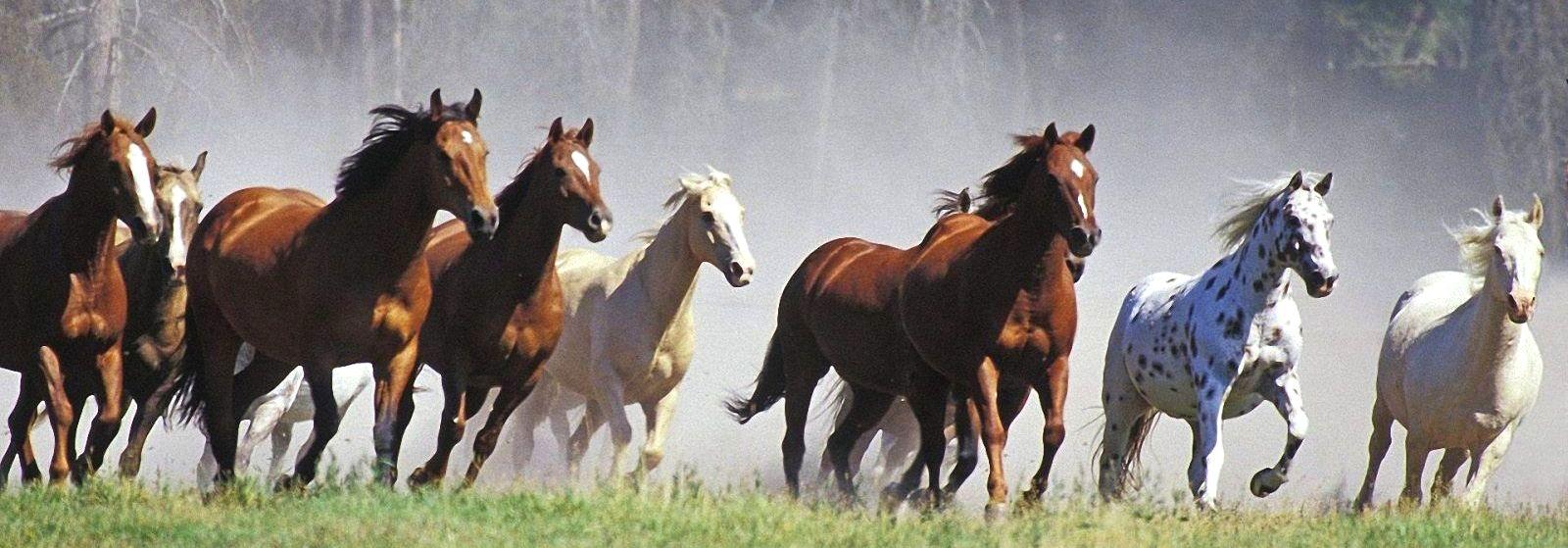 Masse hester som løper over gresset